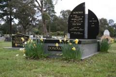 Donovan-daffodils