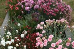 Flowers-Daroesman